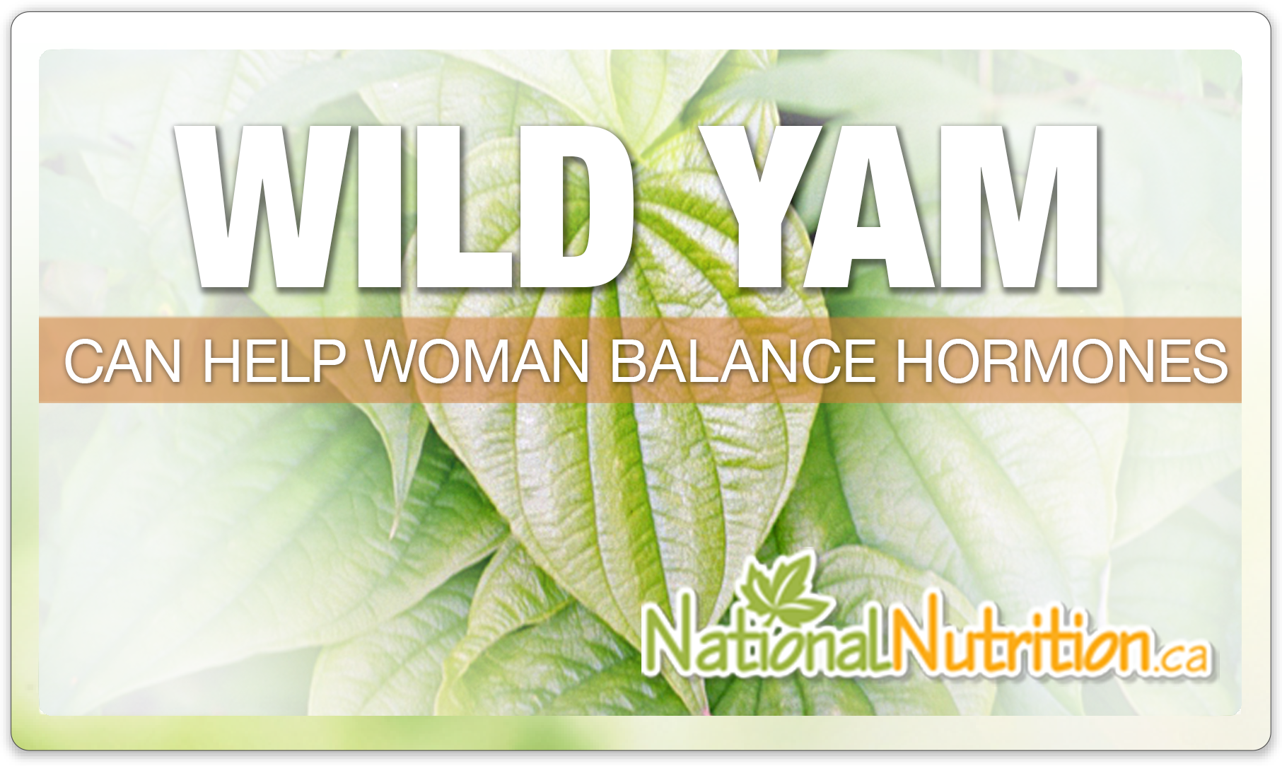 Wild Yam - National Nutrition Articles